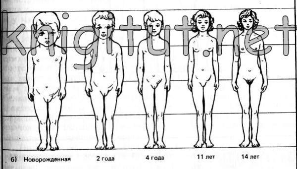 Изменения пропорций тела от